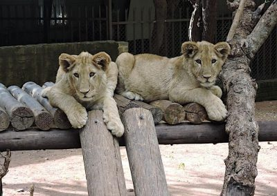 Lion-and-Reptile-Park-03